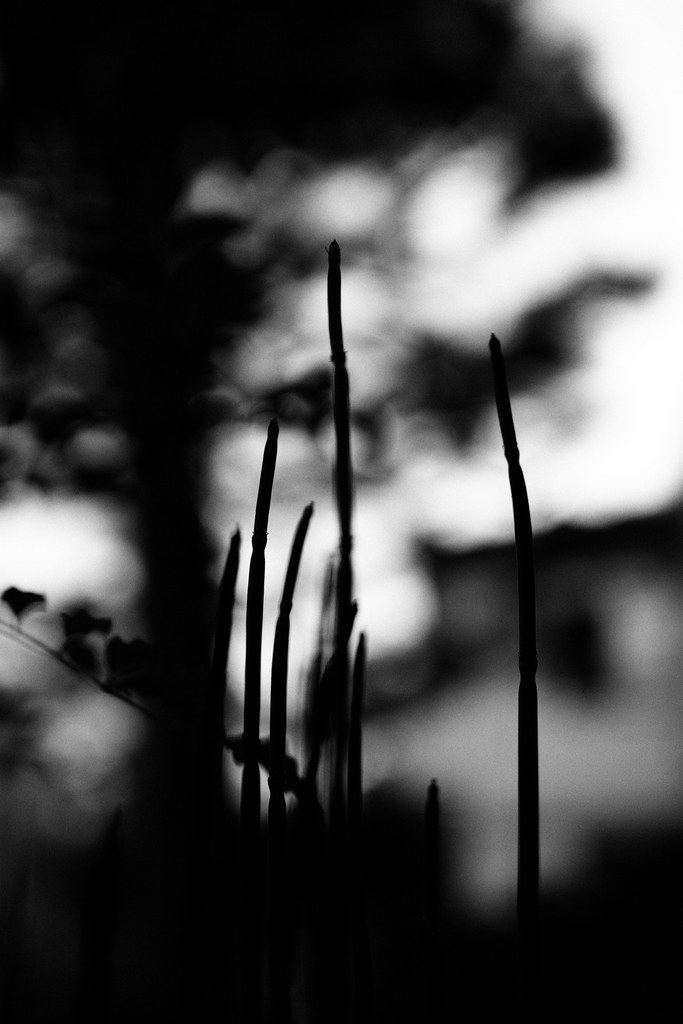 20160819_11_SIGMA sd Quattro + 24mm F1.4 DG HSM A015 First shot ( Monochrome )