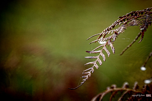 fern_03 | by alamond