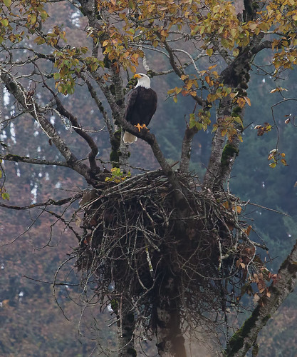 how to create zones in nest