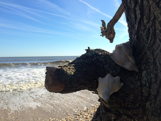 Sea Shells and Southern Homes. Botany Bay, Charleston, and to Atlanta. November 18-21, 2015.