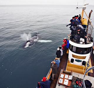 Hjalteyri Whale Watching