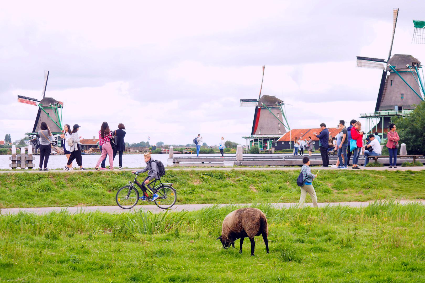 Amsterdam con Perro, Amsterdam con Mascotas amsterdam con perro - 29397498686 f2df262d50 o - Visitar Amsterdam con perro