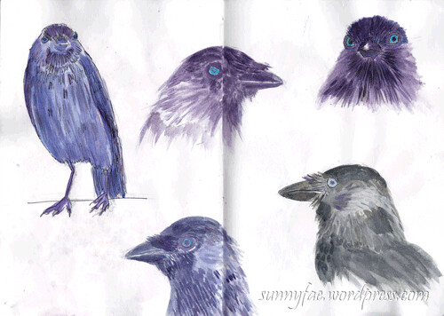 crow-sketch-II