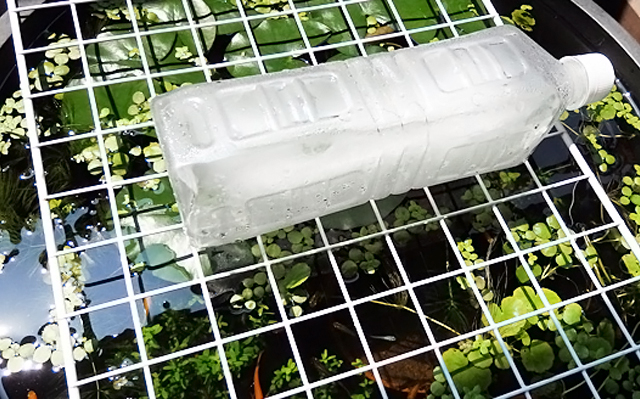 ビオトープ 猛暑 暑さ対策 保冷剤