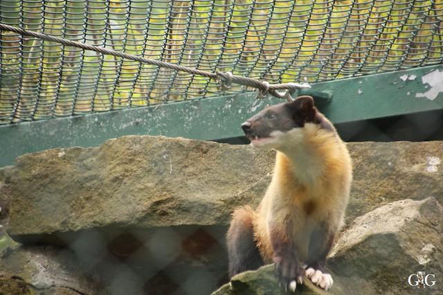 Besuch Tierpark Friedrichsfelde 07.08.1643