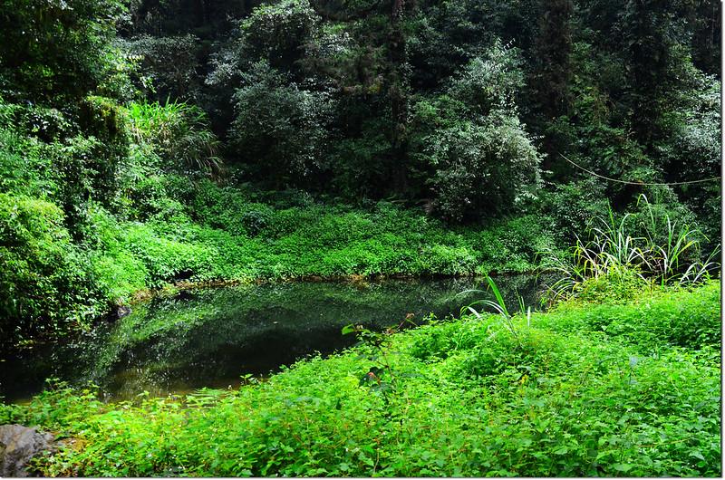 忘憂森林的綠 (1)