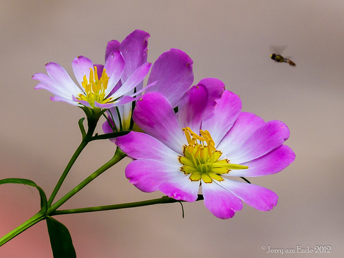 mmmm, a Pink and Yellow Lunch | by Jerry_a