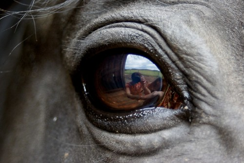 in the eye of the ... horse | by michael pollak