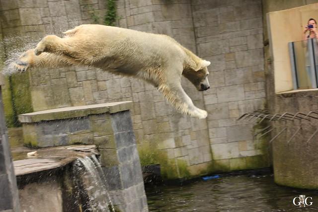 Zoo Rostock 2. Teil 20.08.201648