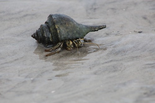 Hermit Crab | by USFWS/Southeast