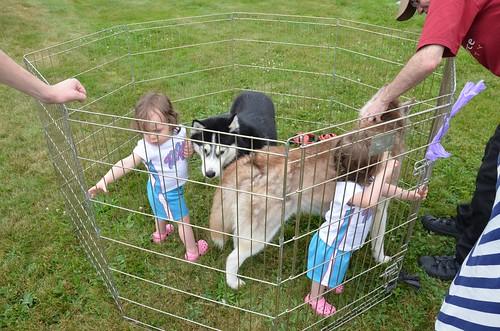 Dog Cage White Uk