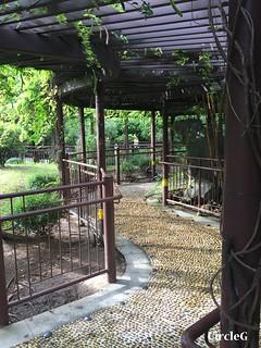 CIRCLEG 香港 遊記 美孚 嶺南之風 荔枝角公園  (48)