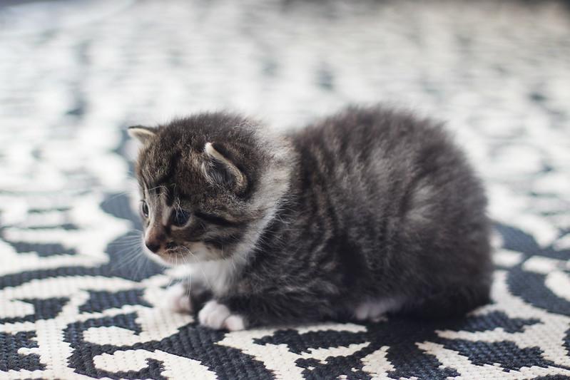 kissavauvoja5