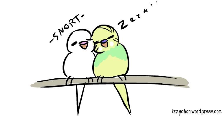 budgies white bird dennis sleeping