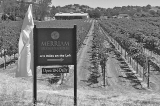 Merriam Vineyards - Vines