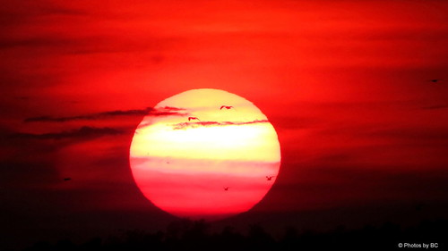 Birds at Sunset. | by ~~BC's~~Photographs~~