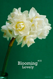 Blooming Lovely #15 | by Sewing Daisies