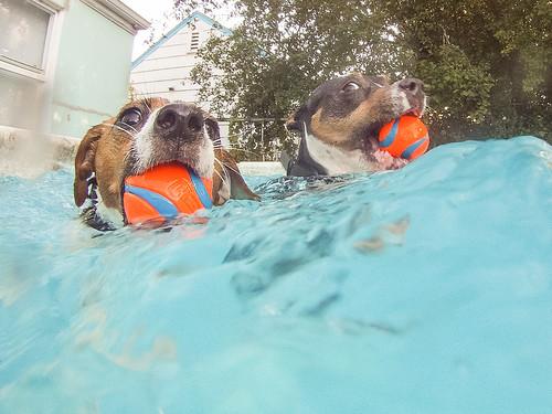 GoPro Pool-8695