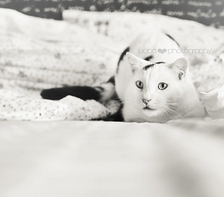 Play | by uccia♥photography