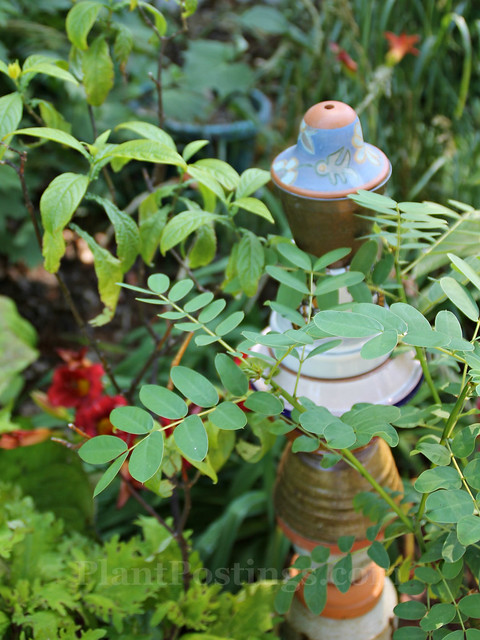 10 shannon garden