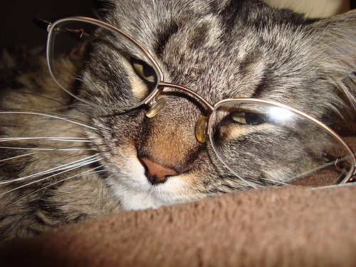 Have you ever wondered how your cat sees the world? Keep reading for facts about cat vision and the difference between cat and human eyesight!