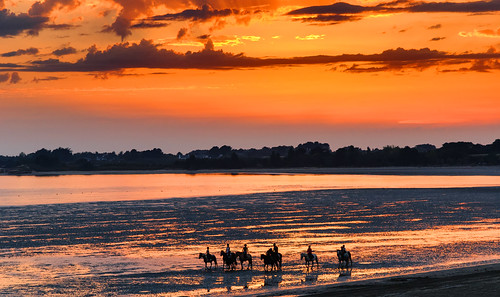 Horses in the sunset!