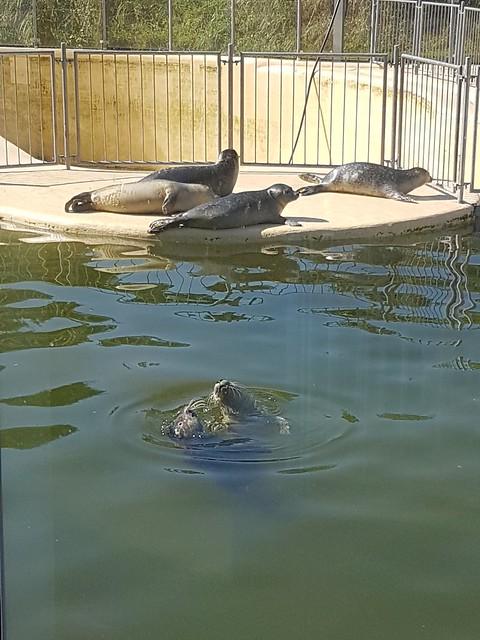 Seehundeaufzuchtstation