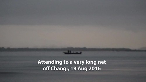 Attending to a long net at Changi, Aug 2016