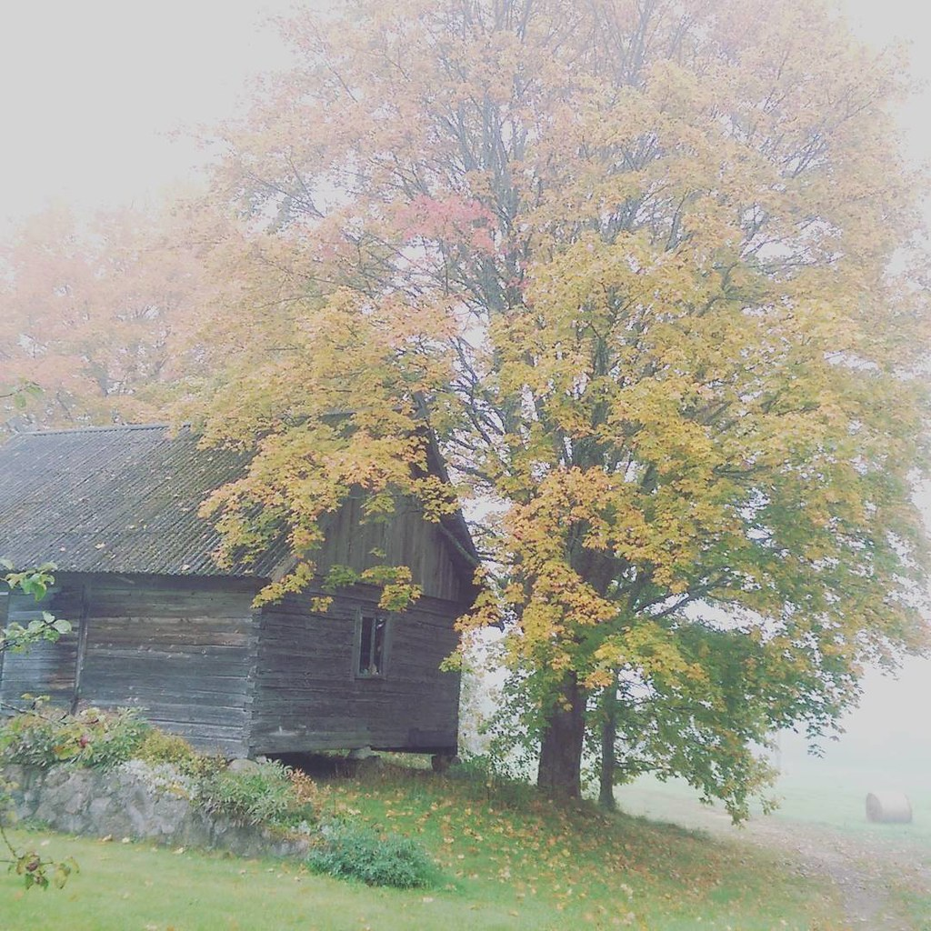 foggy autumn day