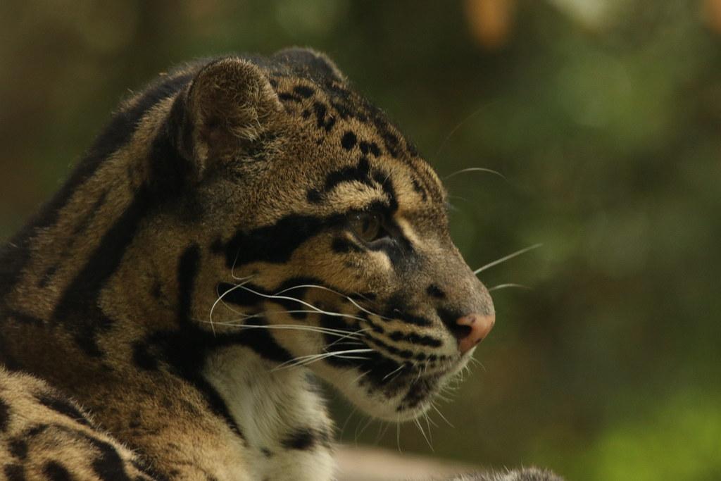 Zoo de la Boissère du Doré 29408717790_0f3c7f160d_b