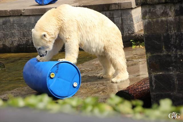 Zoo Rostock 2. Teil 20.08.201624