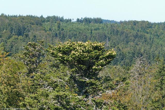 Baumwipfelpfad Sicht oben