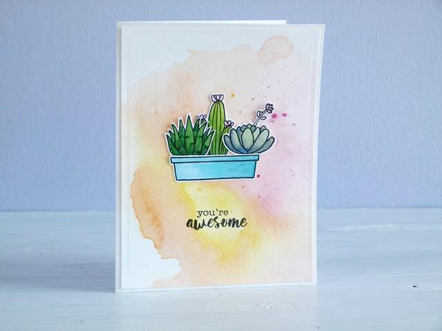 Cactus 2/3