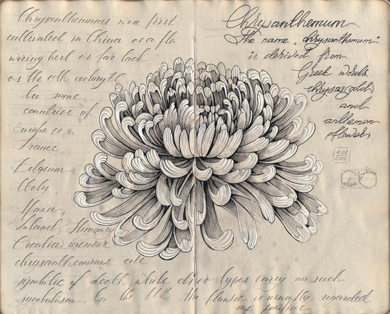 Chrysanthemum ink