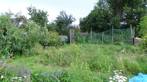 High Spen Hop Garden Aug 16 (1)