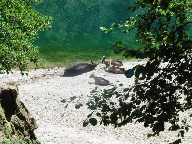 Strand mit Esel und Ziege, Kostelski buk