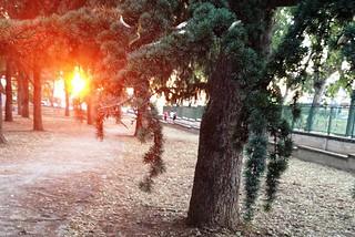 Noicattaro. Situazione di abbandono al parco comunale front