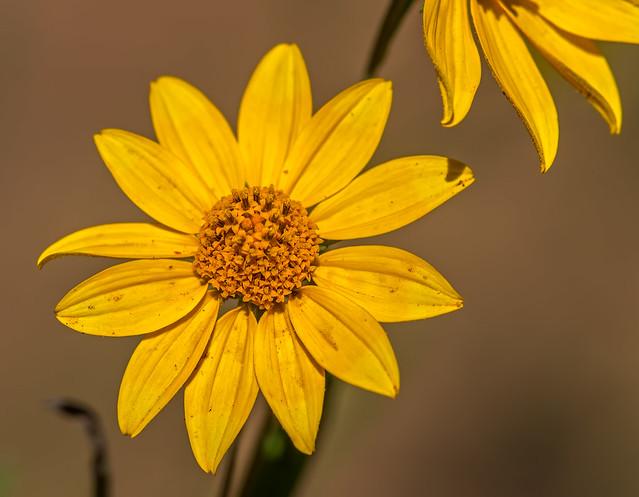 Flower-2-7D1_091616
