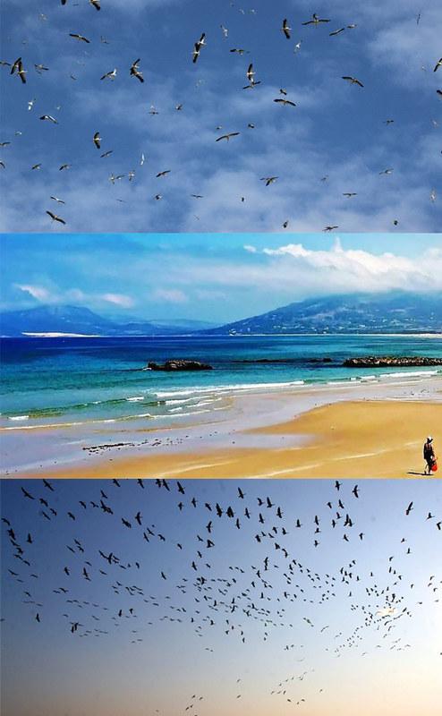 aves en Tarifa