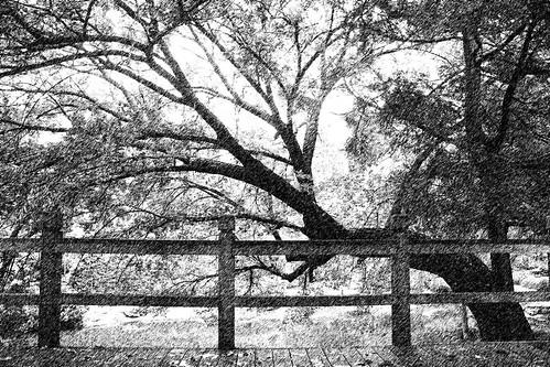 JG Tree