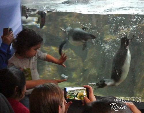 160703d Splash Zone and Penguins _14