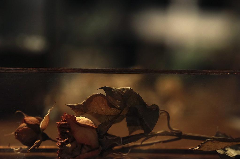 a dry rose