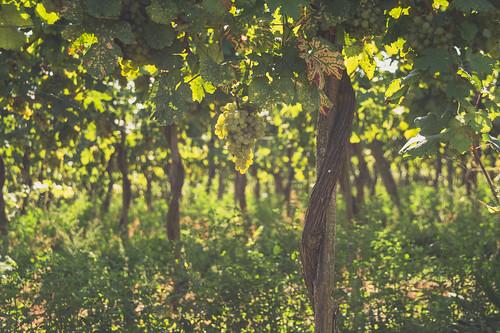 Im Weingarten 2