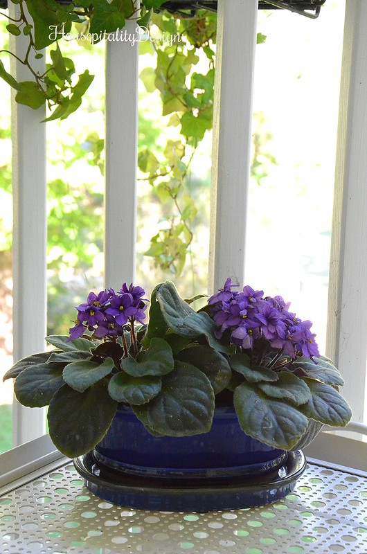 African Violet - Housepitality Designs