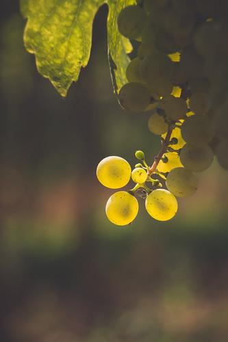 Im Weingarten 1