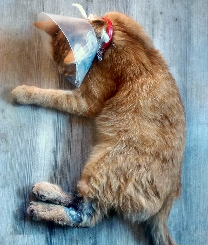 Miután milliméterekkel túlélte a lábai szétvágását