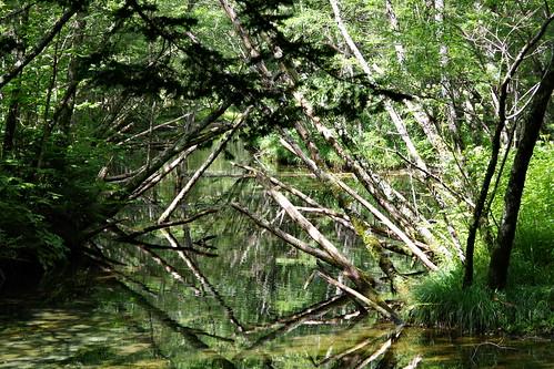 Taisho-ike pond Kamikochi 2016 summer 13