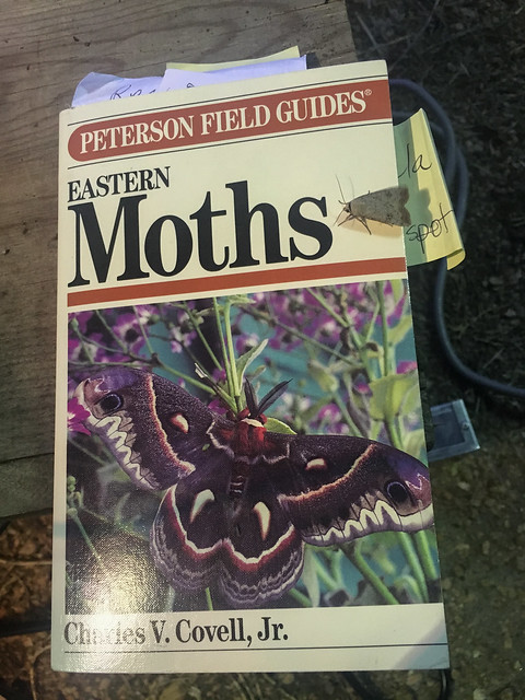 Moth Guide with Moth