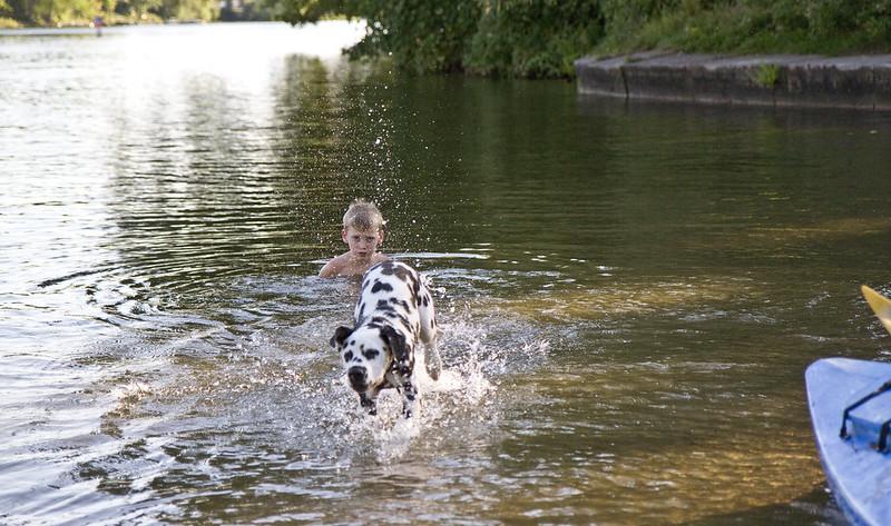 dalmatian splash