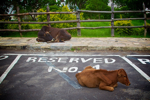 Reserved | by Katya_N